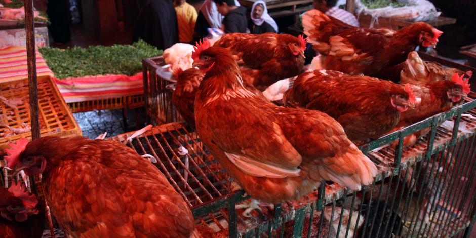 الإقبال على محال بيع الدواجن وإحجام عن شراء اللحوم البلدية لارتفاع أسعارها بكفر الشيخ