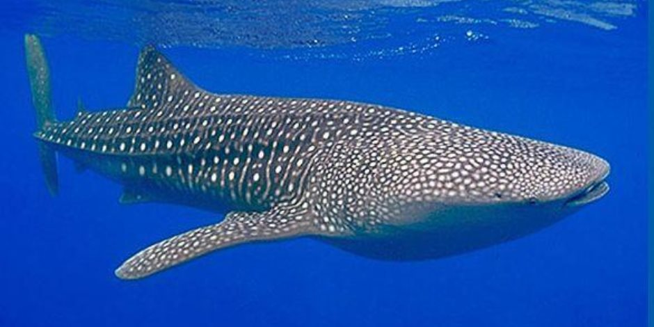 استشاري طب نفسي: صاحب فكرة لعبة الحوت الأزرق لدية اضطرابات في الهوية الجنسية