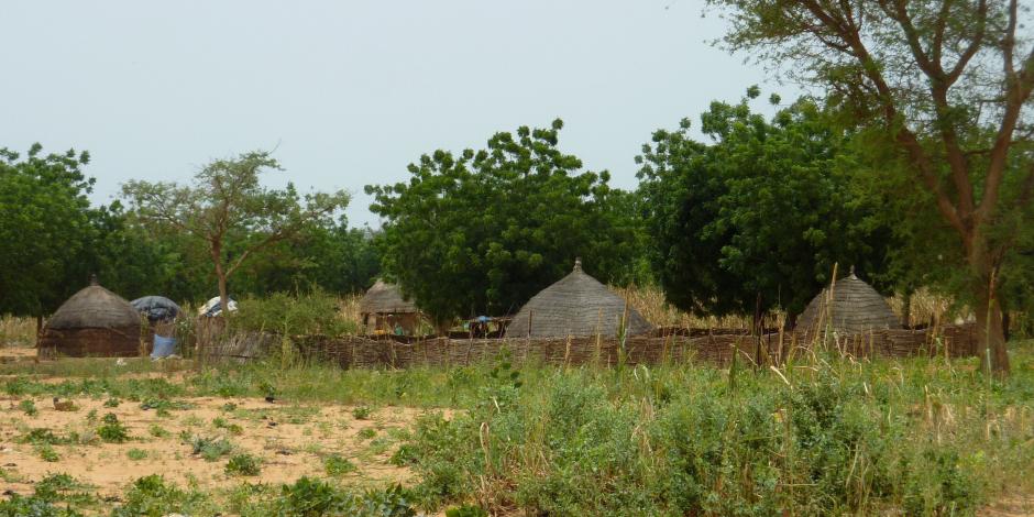 الأراضي الزراعية 9.4 مليون فدان.. نصيب الفرد من المعمور انخفض 90% في 100 عام ومعرض لمثلها في 30 أخرى