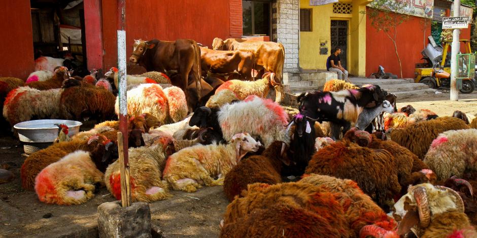 5 جنيهات في الماعز و10 للعجول.. سر تراجع أسعار اللحوم والأضاحي عن العام الماضي
