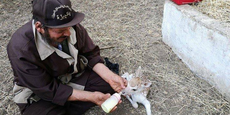 تعرف على أبرز استعدادات حديقة الحيوان لاستقبال الزوار في عيد الأضحى (صور و فيديو)