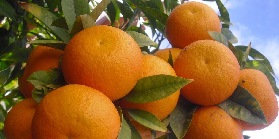 أسعار الخضروات والفاكهة اليوم الأربعاء 12-2-2020.. البرتقال بـ 2 جنيه للكيلو