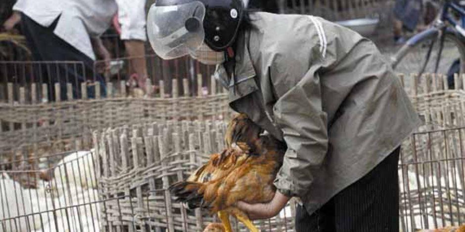 الزراعة والصحة تستعدان لموسم الطيور المهاجرة خوفا من انتشار الانفلونزا القاتلة