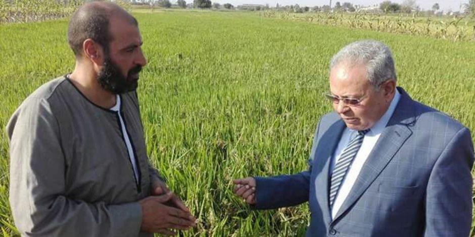 """أستاذ وراثة بـ""""زراعة الزقازيق"""" يتهم """"البحوث الزراعية"""" بتدمير الأرز المصري"""
