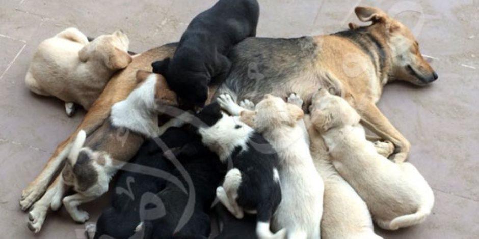 """في اليوم العالمي للمرأة.. """"كلبتهم"""" باسطة ذراعيها بالحنان"""
