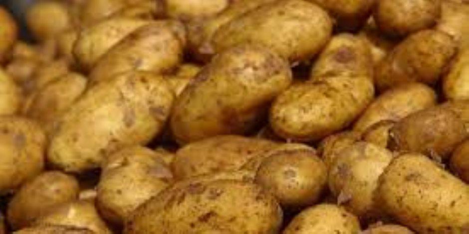 الزراعة:عينات البطاطس التي رفضتها روسيا خالية من العفن البني