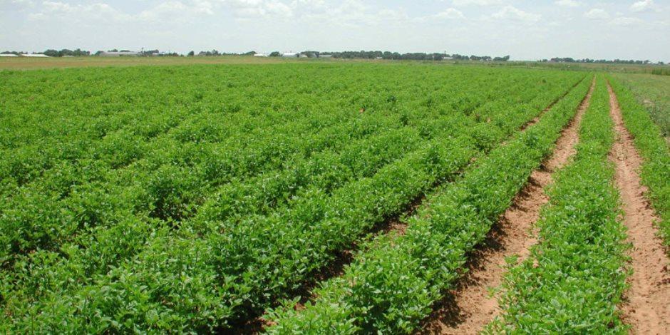 خلال سقوط الأمطار.. «الزراعة» تضع 7 توصيات لري وتسميد المحصول