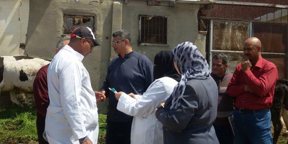 11 خطوة لتحصين الماشية من الحمى القلاعية والوادى المتصدع فى بورسعيد (صور)