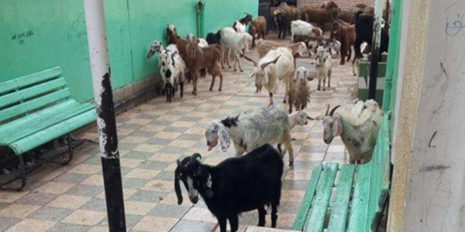 مدرسة نبروة للتعليم الأساسي تتحول لحظيرة مواشى (صور)