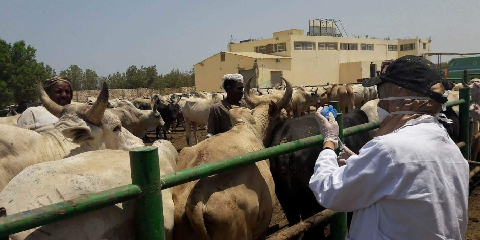 تحصين 102 ألف رأس ماشية ضد الحمى القلاعية ومليون طائر ضد الإنفلونزا بأسيوط