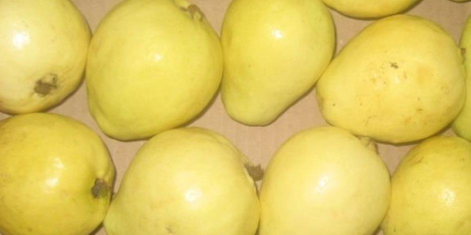 مفيدة لصحة القلب.. تعرف على فوائد تناول الجوافة