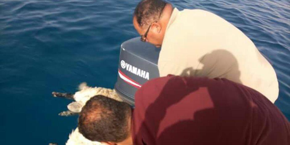 وزارة البيئة تكشف حقيقة الخراف النافقة بالبحر الأحمر