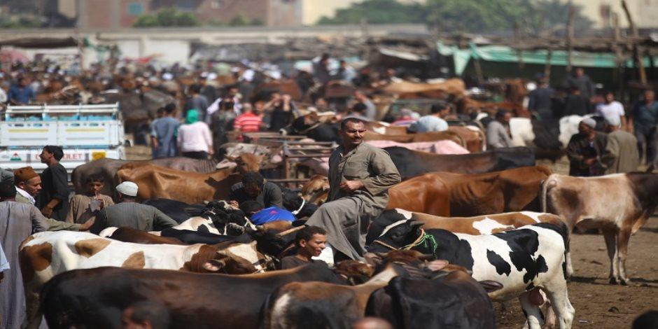 رغم كورونا.. حملات تحصين الماشية من الحمى القلاعية والوادي المتصدع لم تتوقف وعقوبات رادعة للممتنعين