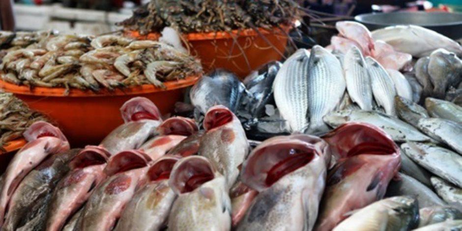 أسعار السمك اليوم الخميس 14-11-2019.. البلطي يبدأ من 25 جنيها للكيلو