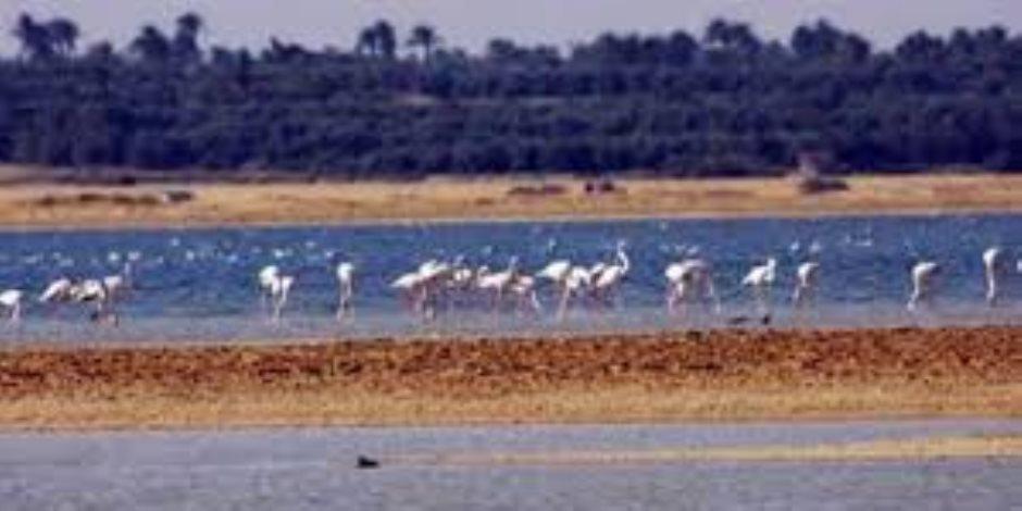 هل ضلّت الطريق أم أزعجناها.. الطيور المهاجرة تُصرّ على خصام مصر