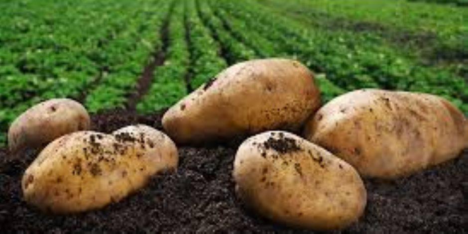 قريباً.. 100 ألف فدان جديدة تدخل المساحات الزراعية بـ5 محاصيل أهمها القمح