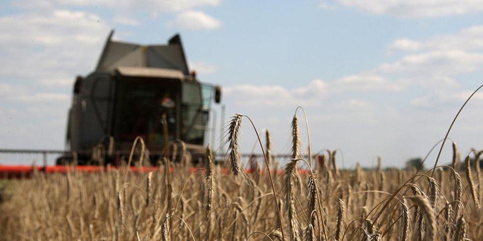 ماذا يخبرنا تقرير الزراعة عن محصول القمح في المحافظات؟