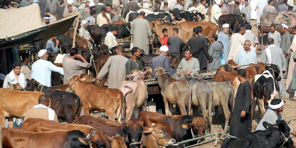 الوجه المضيء لمستقبل إنتاج اللحوم في مصر.. الزراعة تبدأ خطة الاعتماد على «المحلي»