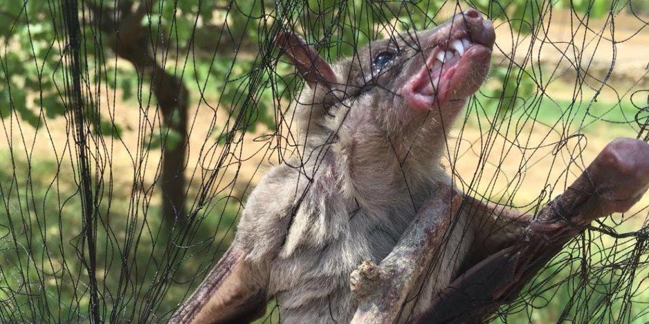 كورونا يضرب بقوة.. الفيروس القاتل يصيب الحيوانات حول العالم