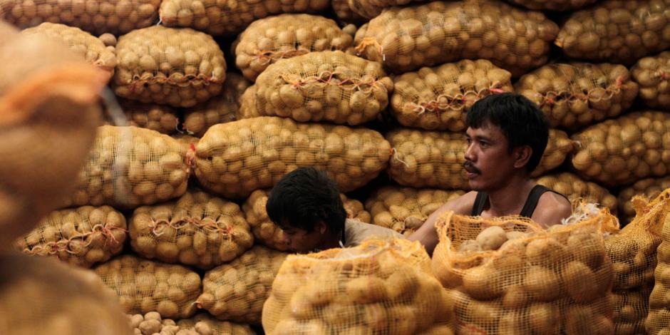 تفاصيل وصول 78 ألف طن تقاوي بطاطس من دول الاتحاد الأوروبي إلى مصر