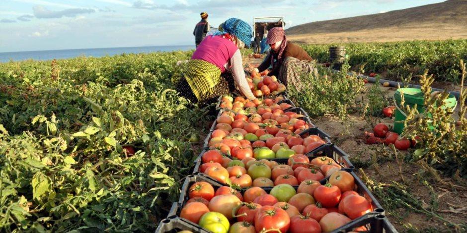 صادرات المنتجات الزراعية المصرية وتغزو الأسواق العالمية.. ونجح الحجر الزراعي