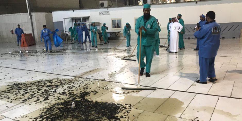 طوارىء في مكة المكرمة.. خطة السعودية لمواجهة ظاهرة انتشار صرصور الليل والجراد