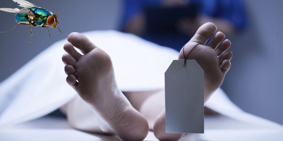 علوم مسرح الجريمة: علاقة «النمل الأزرق» باكتشاف جرائم القتل