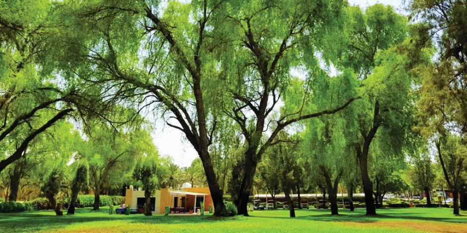 لماذا اختارت الإمارات شجرة الغاف شعارًا لعام التسامح؟