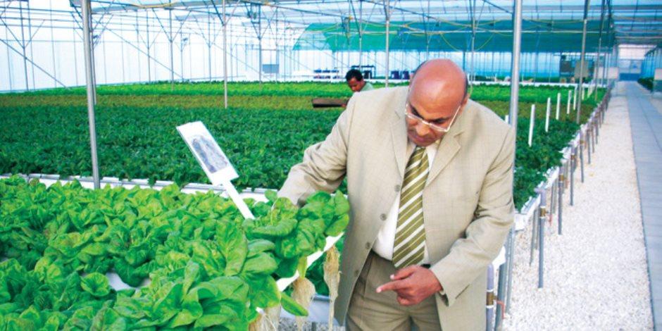 اجمع واحصد واجنى كل يوم.. الزراعة بدون تربة تضاعف الانتاجية وتوفر المياه