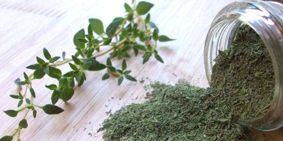 النعناع الأخضر مفيد للصحة.. أبرزها يعالج القولون