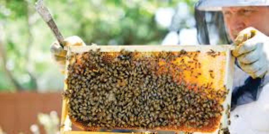 النحالون غاضبون من وزارة «الكلام»..  الزراعة لا تعرف شيئا عن صناعة واستثمار العسل