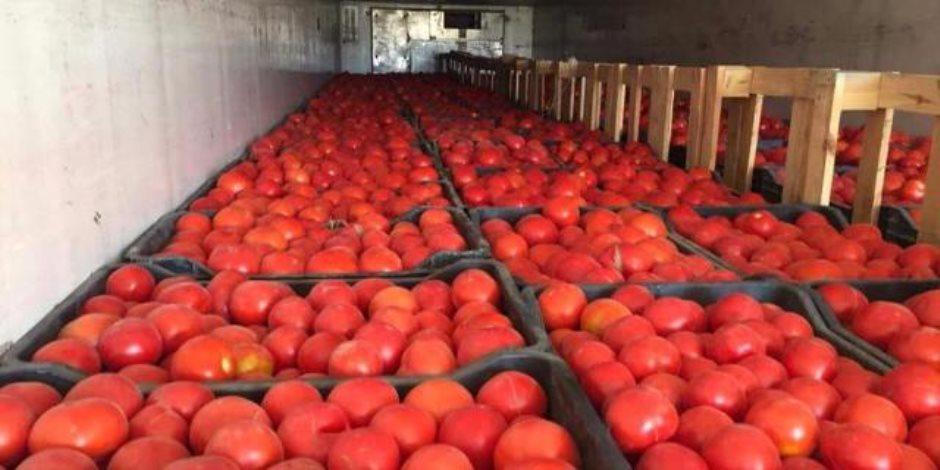 مظلومة يا قوطة.. لماذا لا تسوق الحكومة الطماطم كباقي المحاصيل الزراعية رغم شهرتها العالمية؟