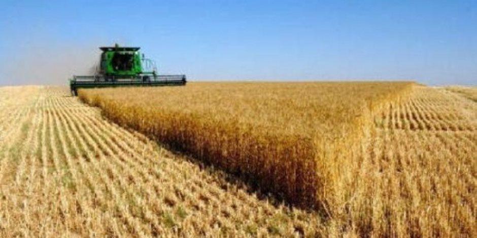 """أول تطبيق لـ""""البورصة السلعية"""" خلال موسم القمح.. وخبراء: تساهم في خفض الأسعار"""