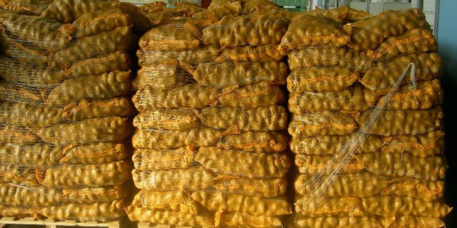 المحاصيل التصديرية تكافئ المزارعين والفلاحين وتعيد الاعتبار للزراعة المصرية عالمياً