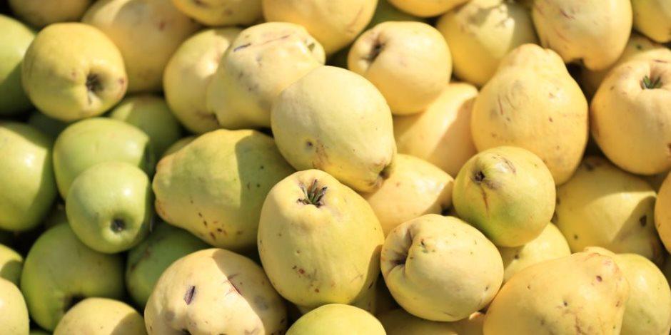 لمزارعى الجوافة.. طرق تسميد ومكافحة الأفات