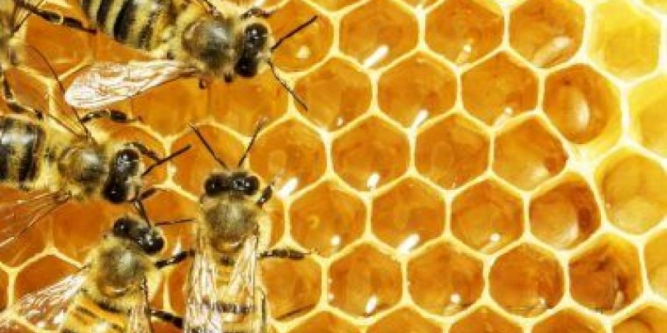 النحل يواجه تهديدا وجوديا بتزايد معدلات انقراض أنواعه..اعرف التفاصيل