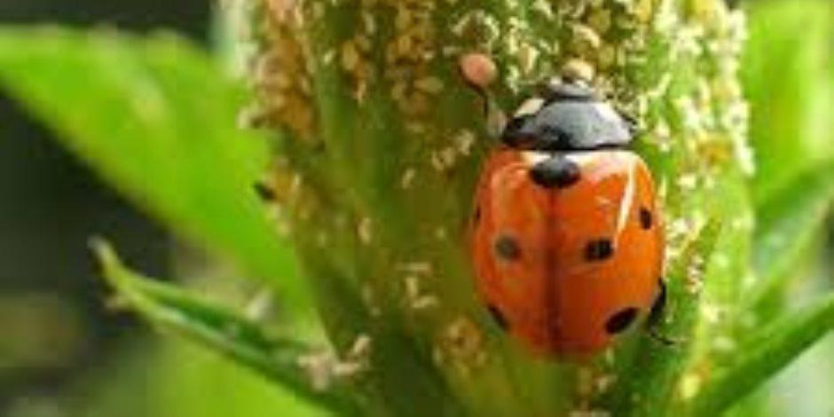 لمواكبة التطور العالمى.. «الزراعة» تتجه للحد من استخدام مبيدات الآفات الزراعية بدورات المكافحة الحيوية