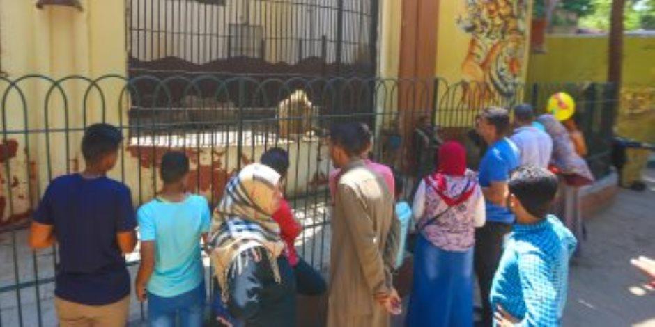 كم زائر لحديقة حيوان الجيزة خلال أيام عيد الأضحى المبارك؟ الزراعة تجيب