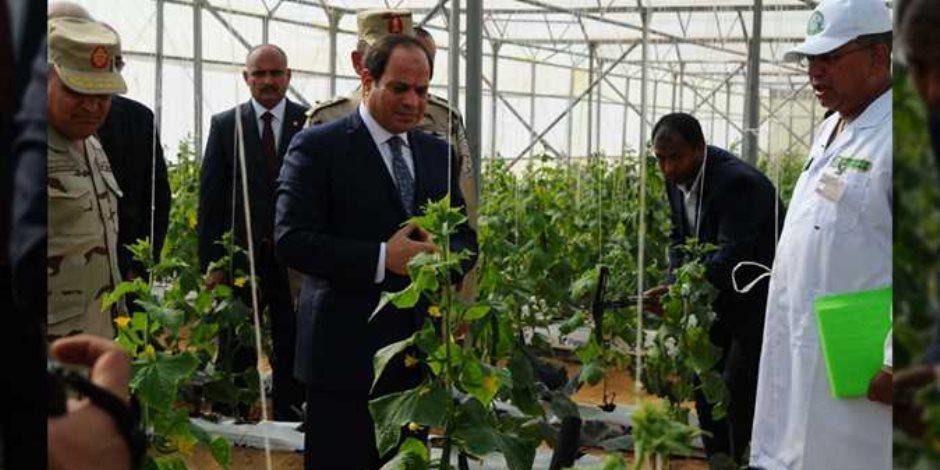 بعد افتتاح 1300 صوبة زراعية ضمن مشروع 1.5 مليون فدان القومي.. طفرة مرتقبة وأمل جديد