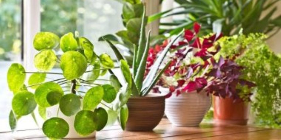 تعرف على فوائد زراعة النباتات فى المنزل