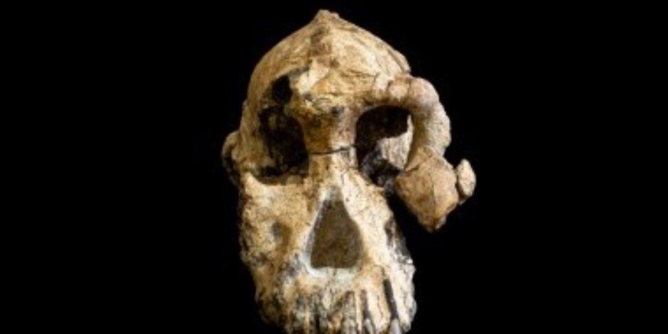 عمرها 4 ملايين عام.. تفاصيل اكتشاف جمجمة مكتملة في إثيوبيا