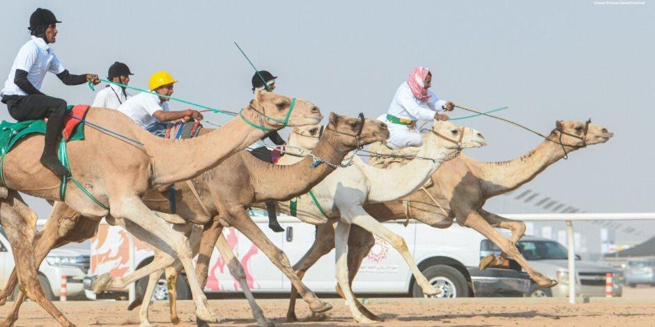 قبيلة «الحويطات» تحصد أول مراكز اليوم الثاني للسباق الهجن التنشيطي بشرم الشيخ (صور)