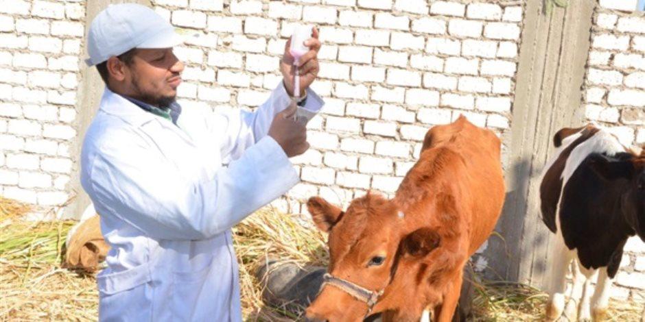 الأمراض الوبائية العابرة للحدود تهدد الثروات الحيوانية والداجنة.. و«الزراعة» تقف لها بالمرصاد