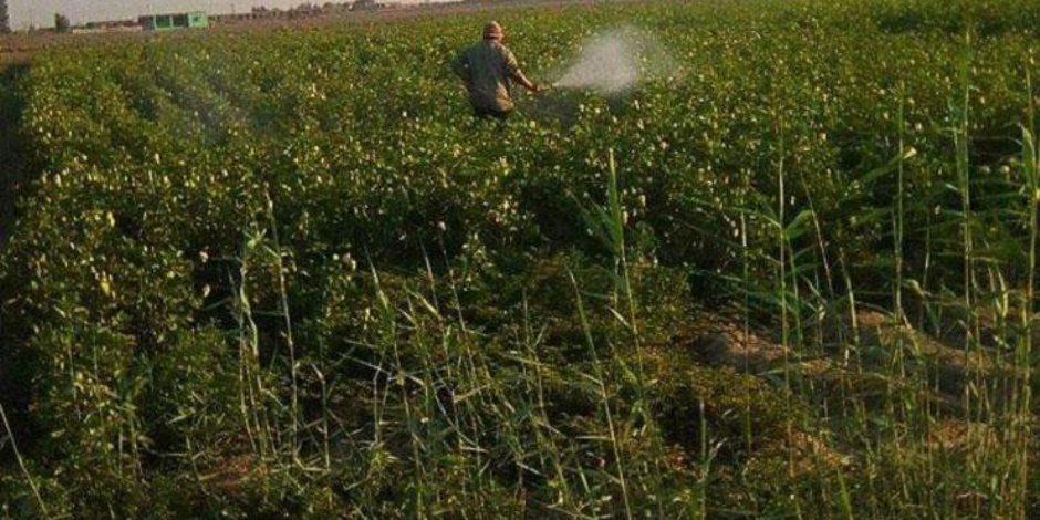 """""""الزراعة"""" تستخدم التكنولوجيات الحديثة في الأبحاث العلمية لمكافحة أمراض النباتات"""