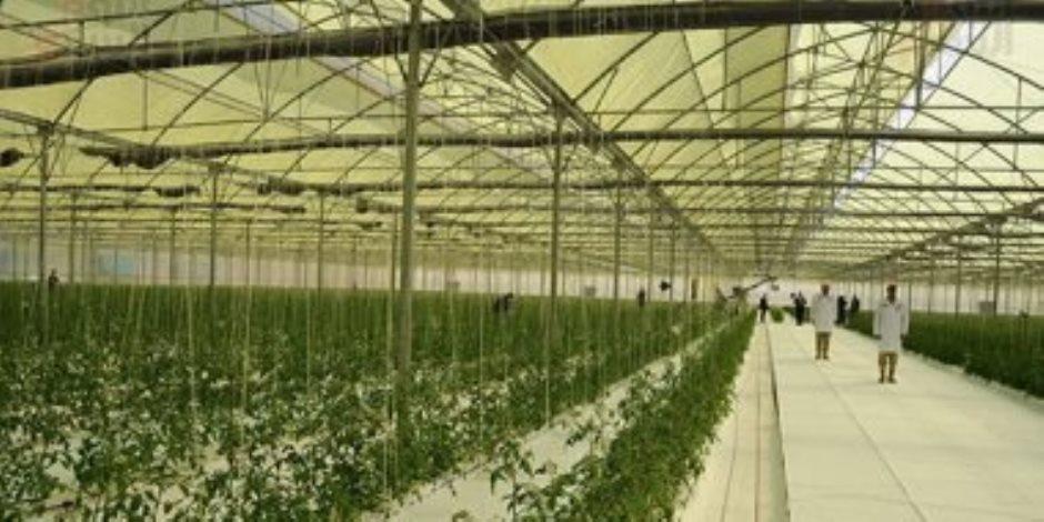 الصوبات الزراعية مستقبل مصر..والمزارعون يبدأون فى التزاحم عليها