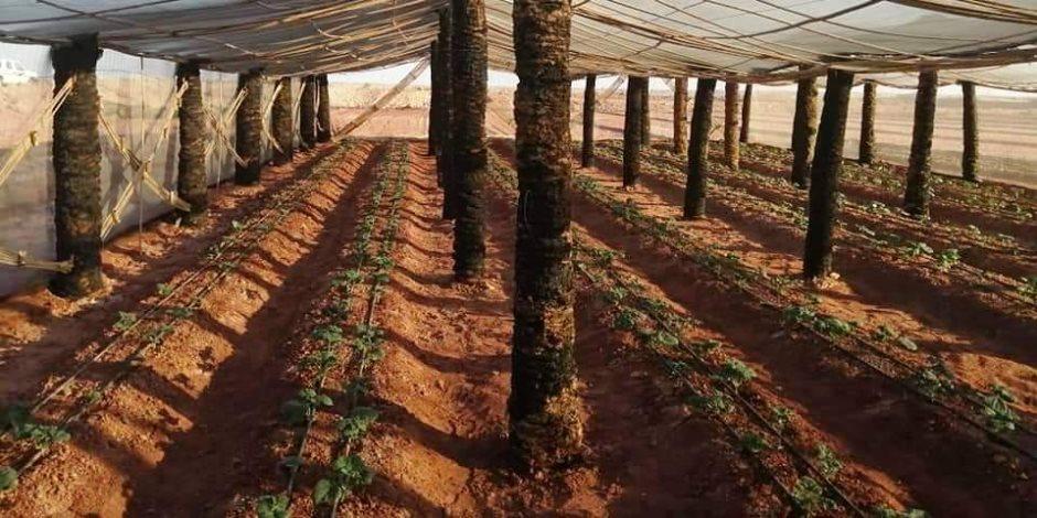 خبراء يكشفون: كيف وفر مشروع الصوب «المنتجات الزراعية» في الأسواق؟
