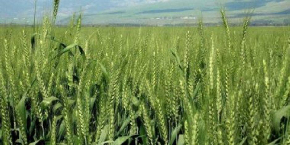 من خلال الإرشادات الزراعية.. المزارعون يواجهون الموسم الشتوي بأمطاره وصقيعه ورياحه