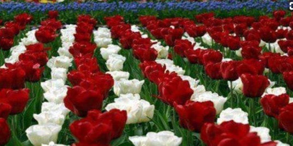 لدعم التصدير.. «زهور القطف» تستعد لمهرجان الخريف بالمتحف الزراعي