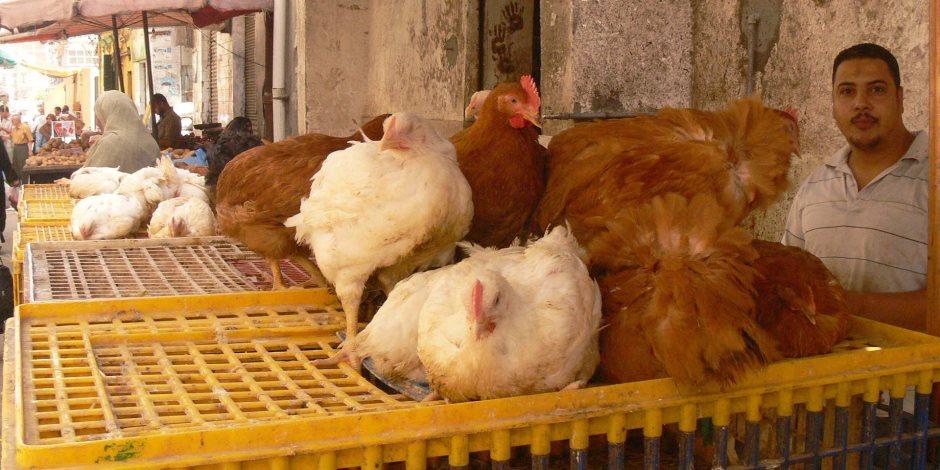 نقل وتداول وذبح الطيور الحية بؤرة لنقل الأمراض.. كيف نتخلص منها؟