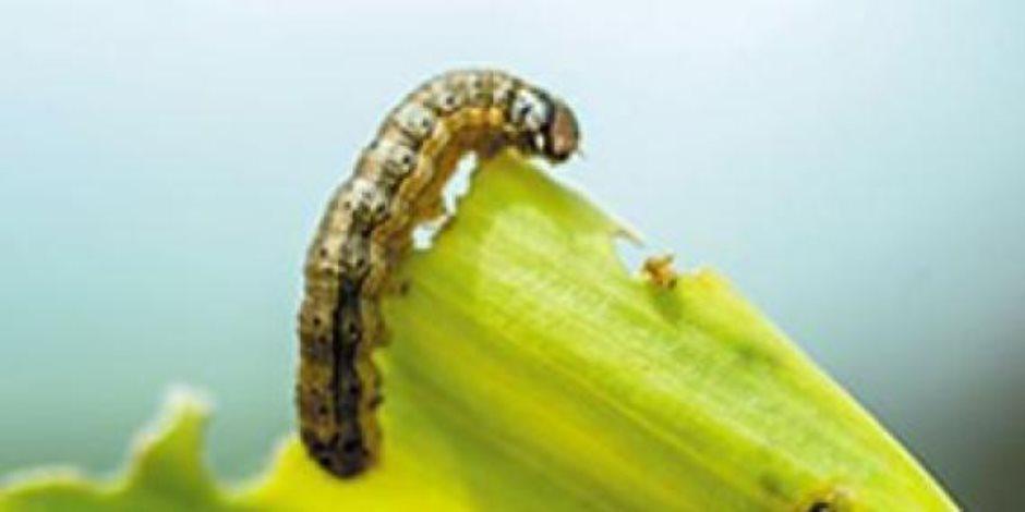 الآفات الزراعية والحشرات في مؤتمر الآفاق المستقبلية لوقاية النباتات.. من ينتصر؟
